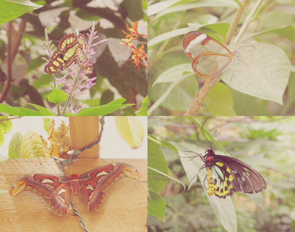 Visited a Butterfly Conservatory in NH. Was a really rad experience.