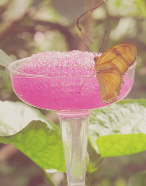 Butterfly Margarita