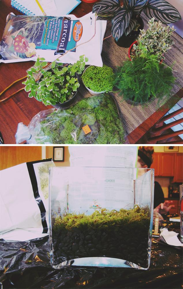 Spent Saturday making terrariums!
