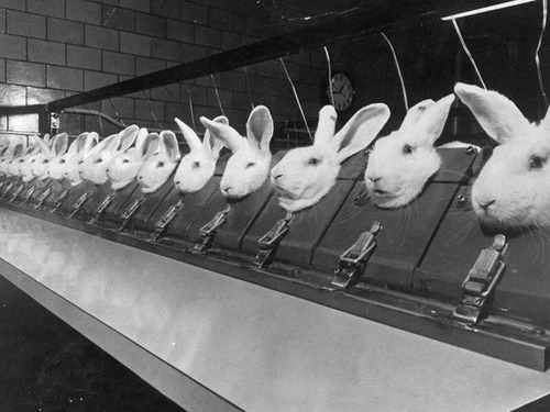 Saw this on someones tumblr and it really bothered me…. juran-juran: cigarettesonfire:rosettes:fleurpowder:jusrinasanpunkrockbarbiedoll: This is a picture of an Animal Testing Facility. The reason they use rabbits for animal testing is because they are the only animal who can not flush chemicals out of their eyes without using aids like water or their paws. Next time you buy cosmetics or hair spray or anything in the beauty section - choose the brands that are NOT tested on animals. Don't be fooled by the fact that this looks like an old photo, this still happens EVERY DAY. Here's a hint: Loreal are the worlds biggest cosmetic animal testers, and Garnier isa sub-company of Loreal. If you have trouble finding out who tests on animals and who doesn't, google is at your fingertips. (via emilymariexvx)