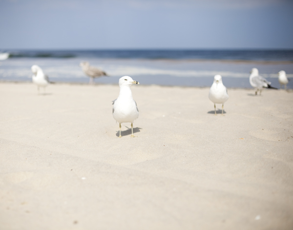 Spent the day at bradley beach. The Seagulls loved me.