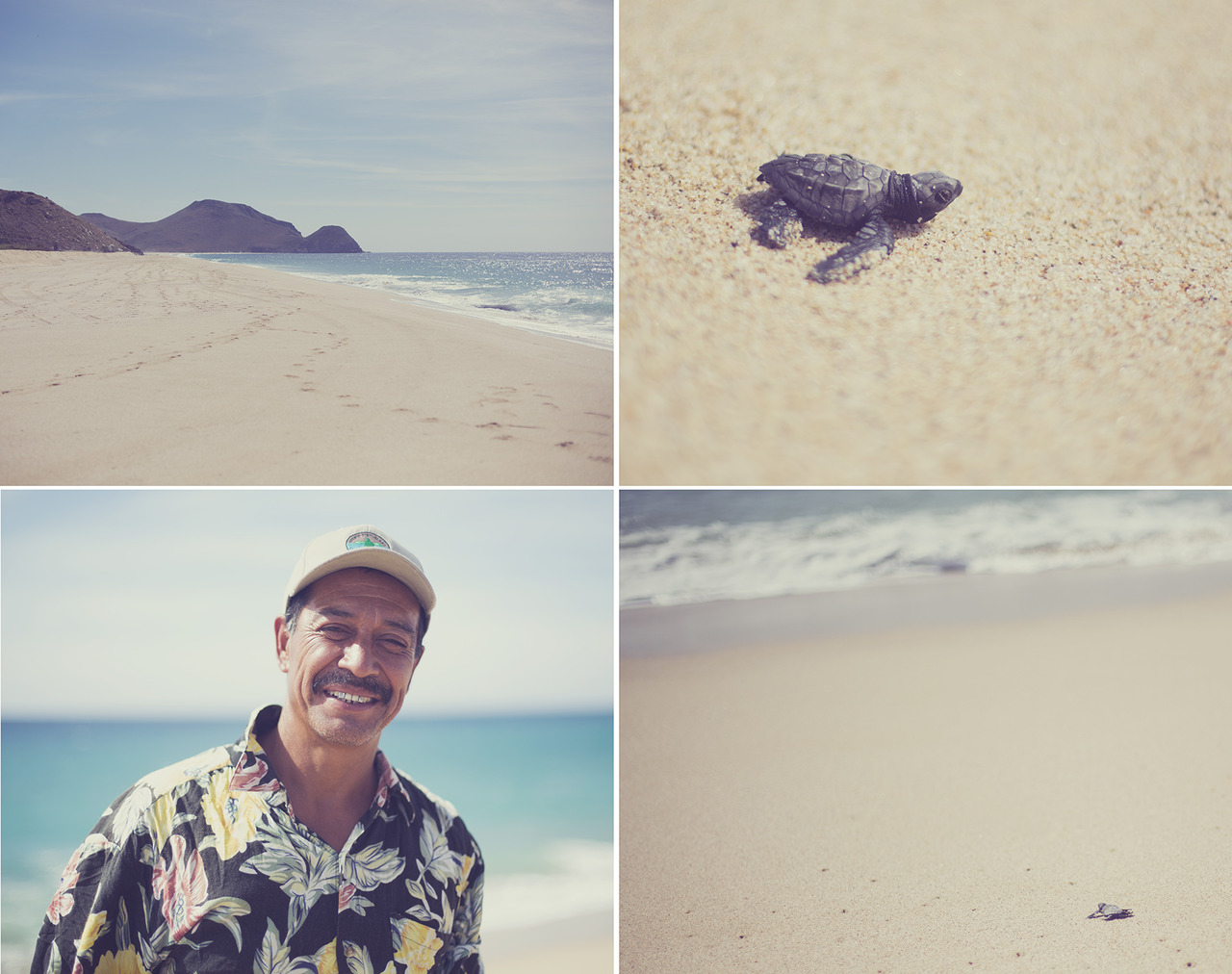 I happened to stumble on an empty beach and a nice man who let me help him release baby turtles into the ocean.   Playa La Cachora   Todos Santos, Mexico