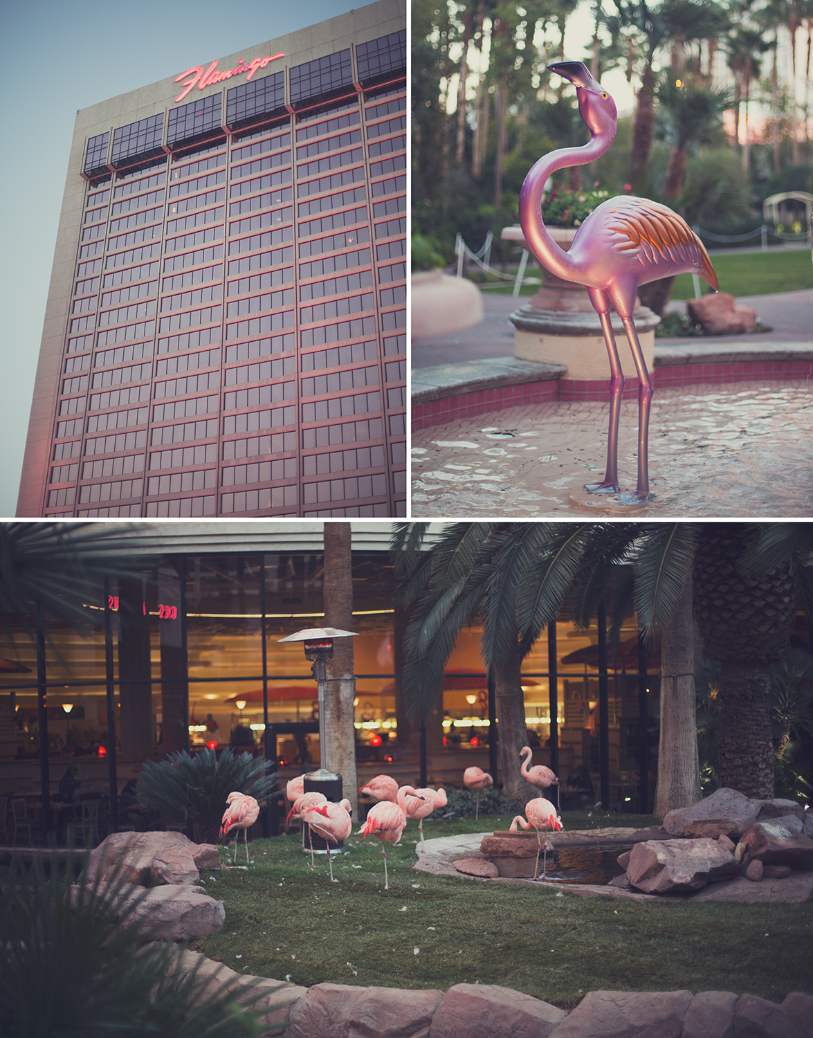 We stayed at the flamingo, which came complete with live flamingos.