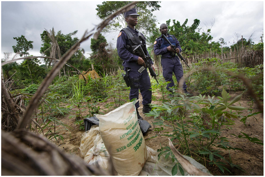 Liberian police stand over bags of rice they found, which they believed to have been looted from the palm tree nursery. Photo by Kuni Takahashi.