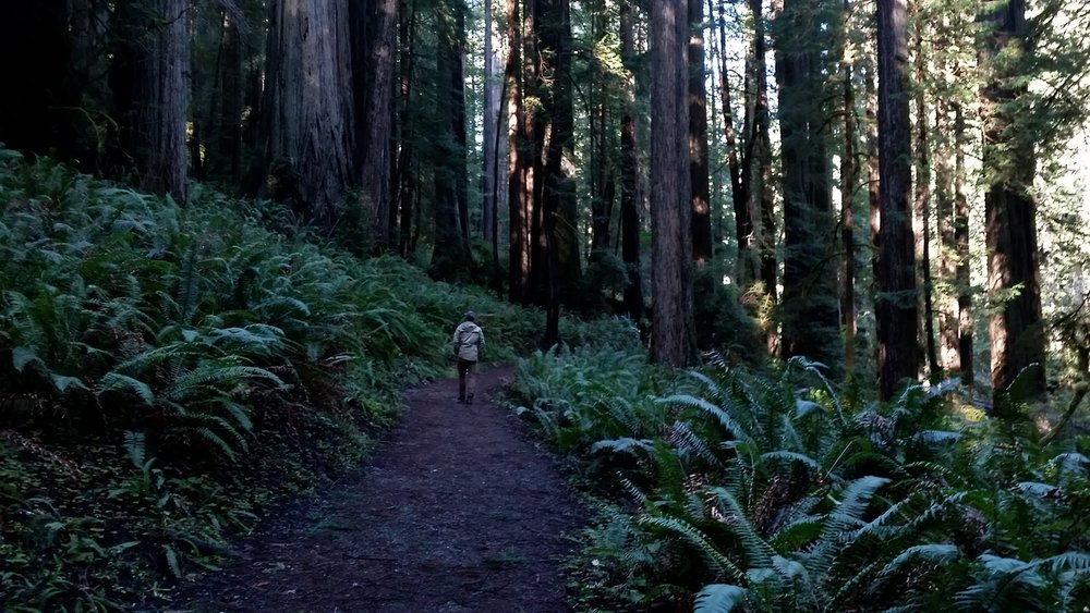redwood2.jpg