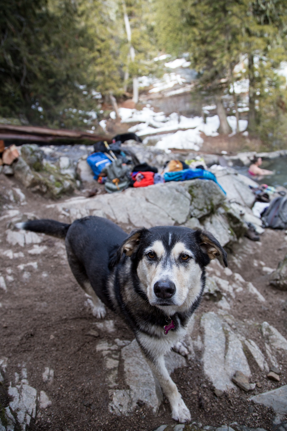 An Alaskan dog, we met two other groups of Alaskans at the hot springs.