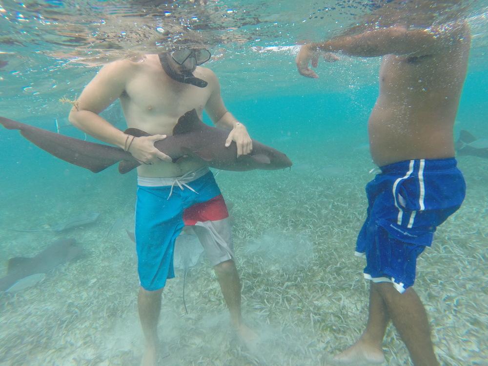 Dillon with a Nurse Shark