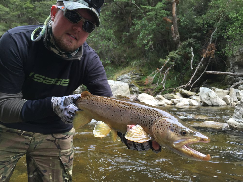 New Zealand fly fishing brown trout back