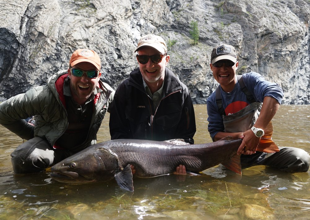 Huge Mongolian taimen caught at Fish Mongolia
