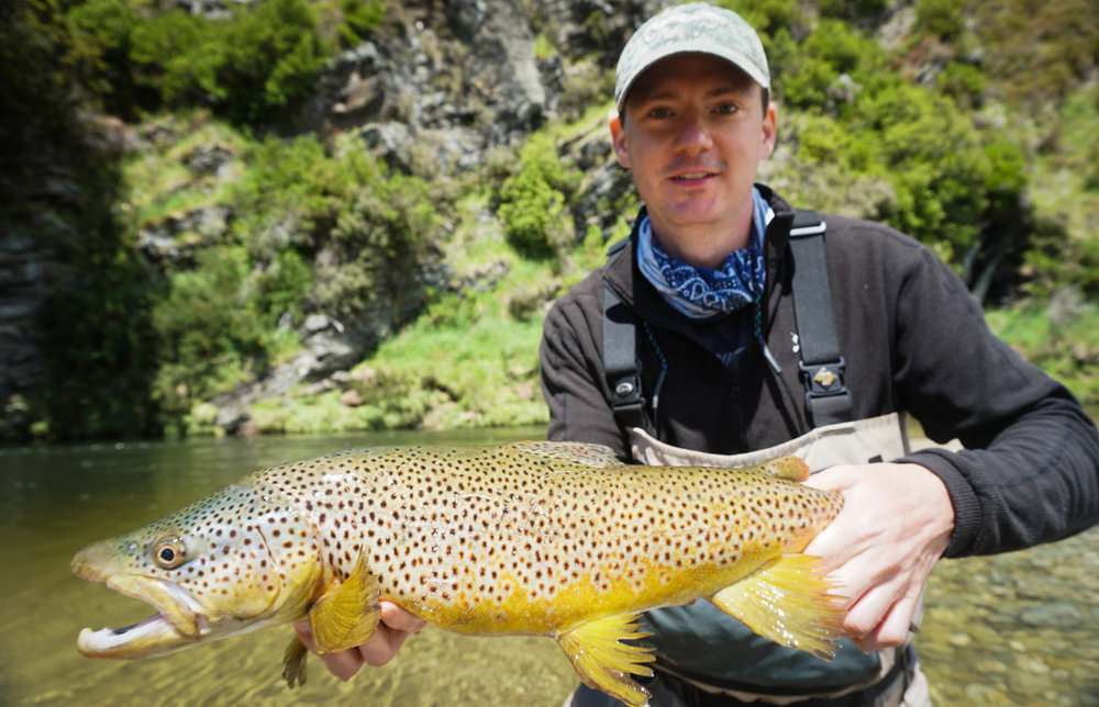 Big brown trout backcountry New Zealand fly fishing