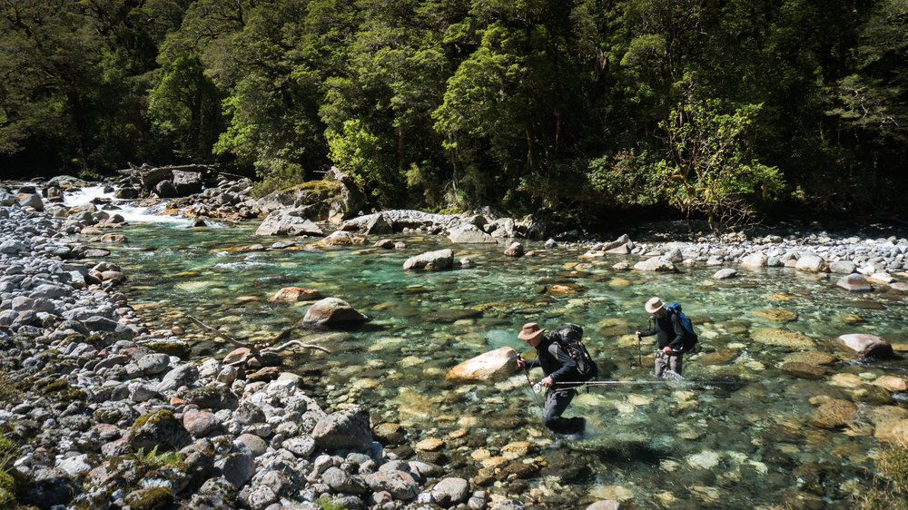 Backcountry fly fishing Fiordland New Zealand. Gin clear river crossing