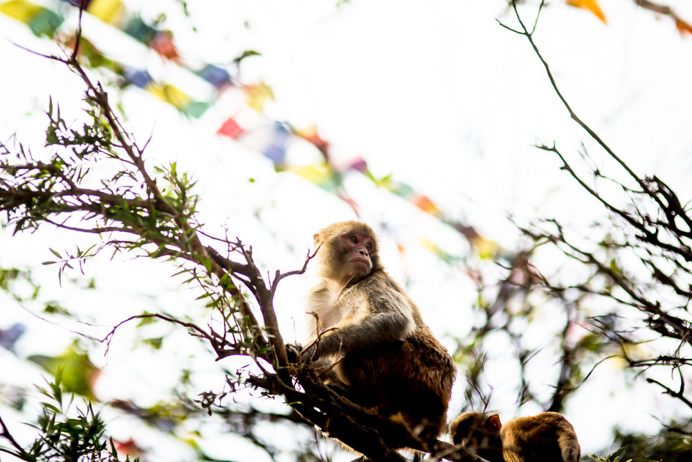 Monkey Temple Monkeys-8.jpg