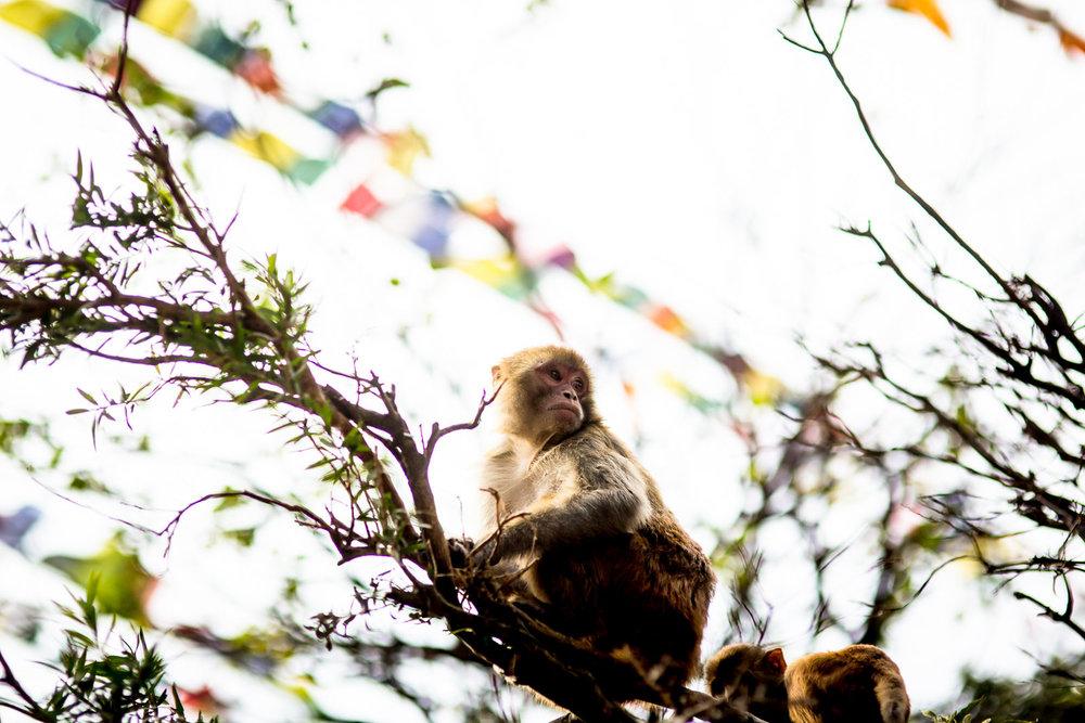 Monkey Temple Monkeys-8.jpg