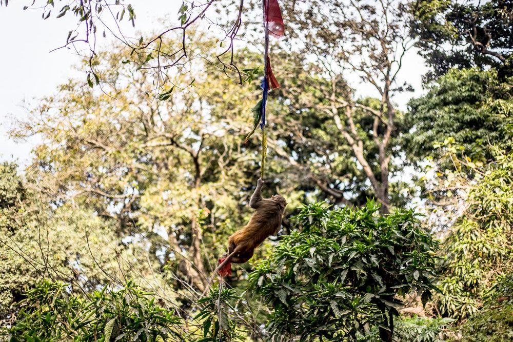 Monkey Temple Monkeys-14.jpg