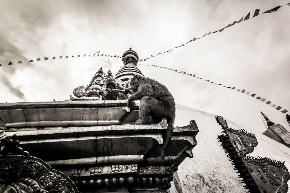 Monkey Temple Monkeys-17.jpg