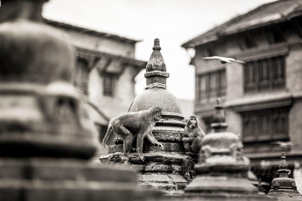Monkey Temple Monkeys-22.jpg