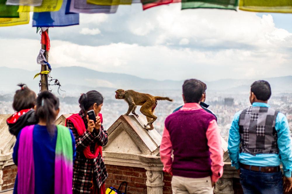 Monkey Temple Monkeys-26.jpg