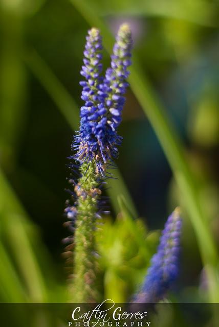 Flower-42-w.jpg