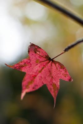 Fall+2012-31.jpg