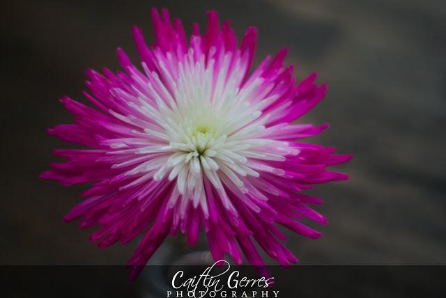 Flower-8-w.jpg