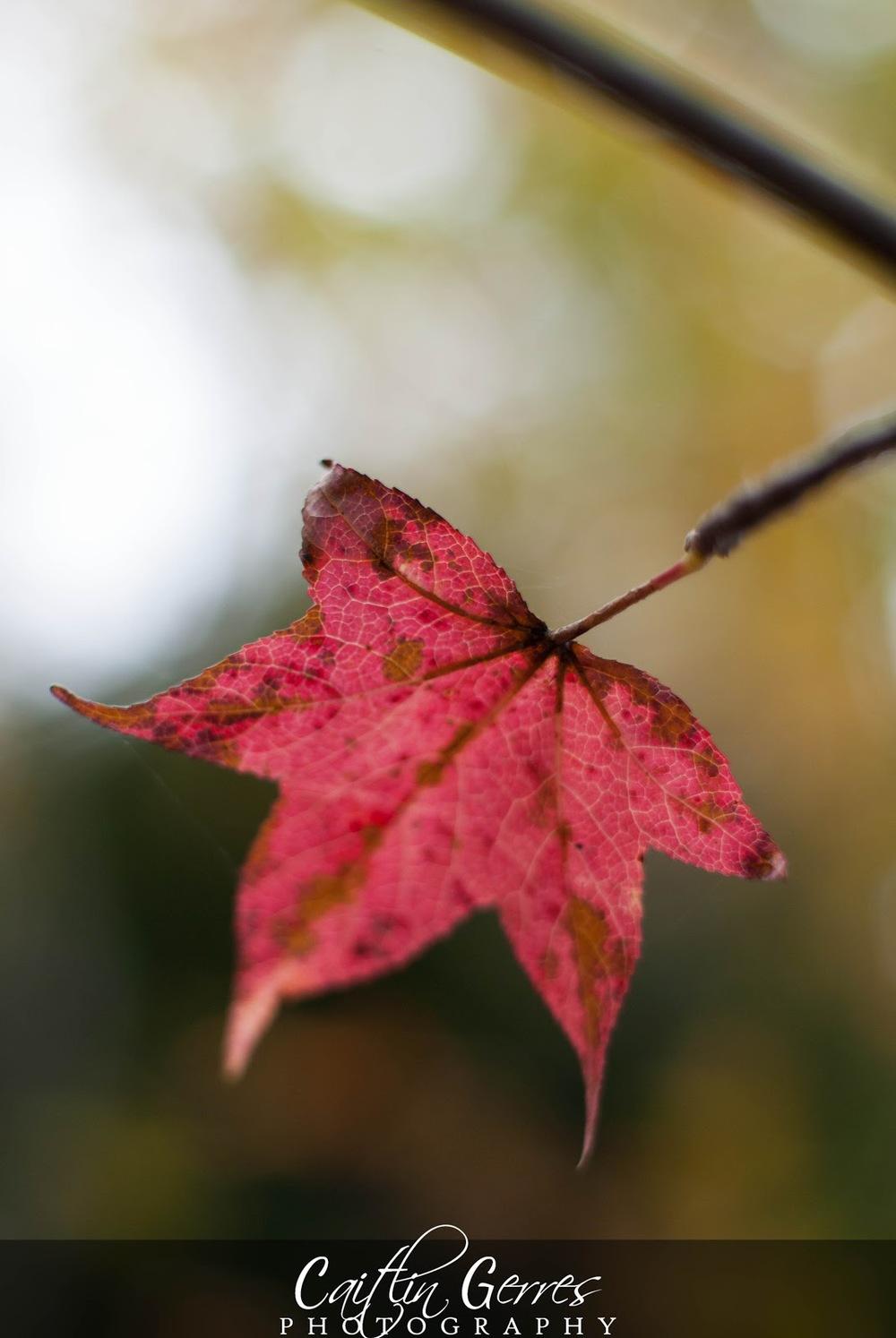 Fall+2012-31w.jpg