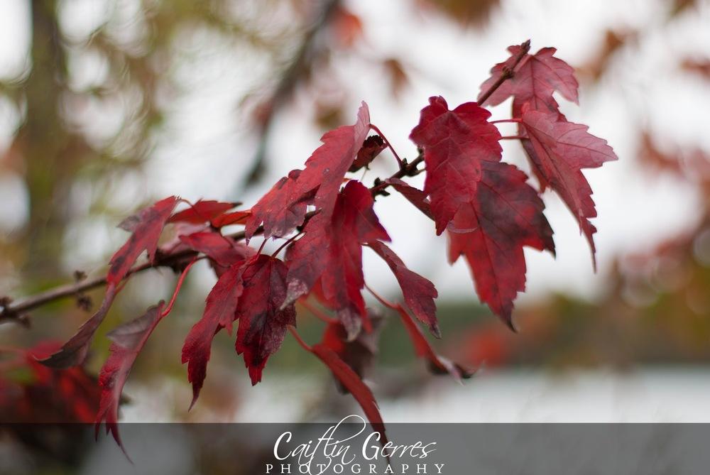 Fall+2012-19w.jpg
