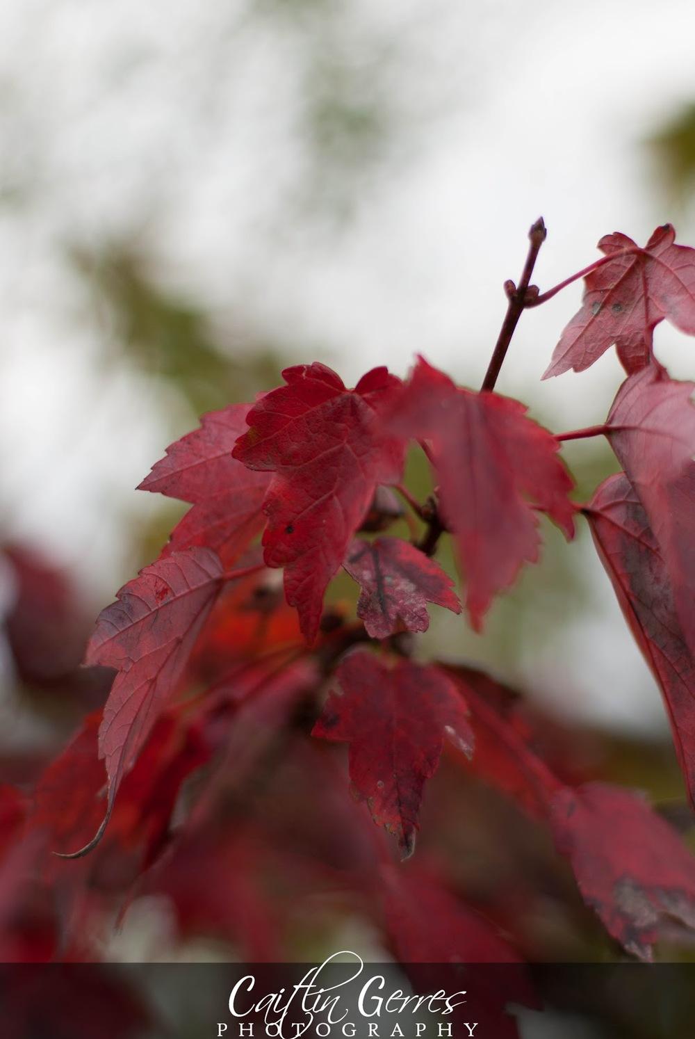 Fall+2012-20w.jpg