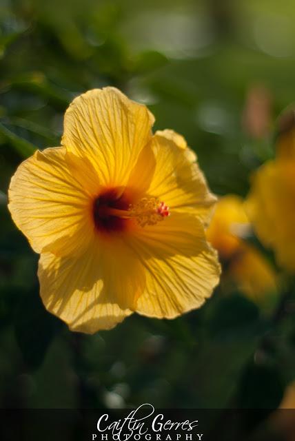 Flower-59-w.jpg