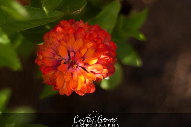 Flower-45-w.jpg