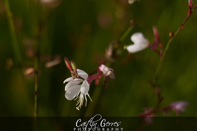 Flower-39-w.jpg