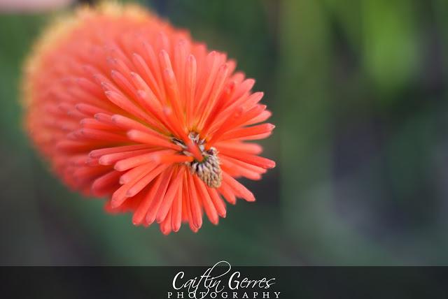 Flower-23-w.jpg