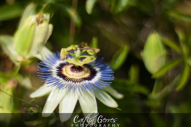 Flower-48-w.jpg