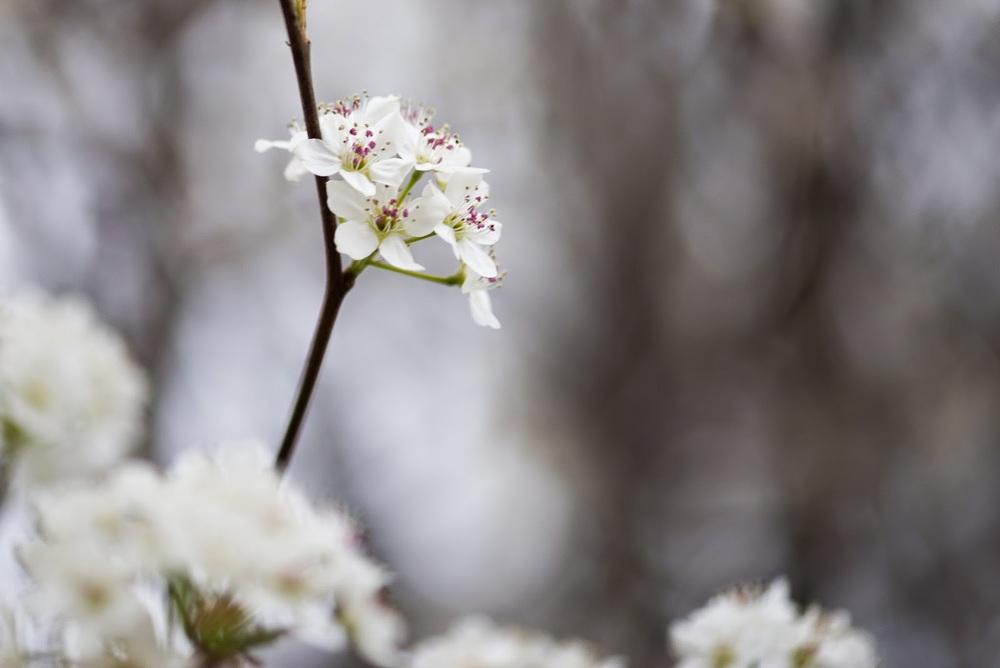 Spring-121.jpg