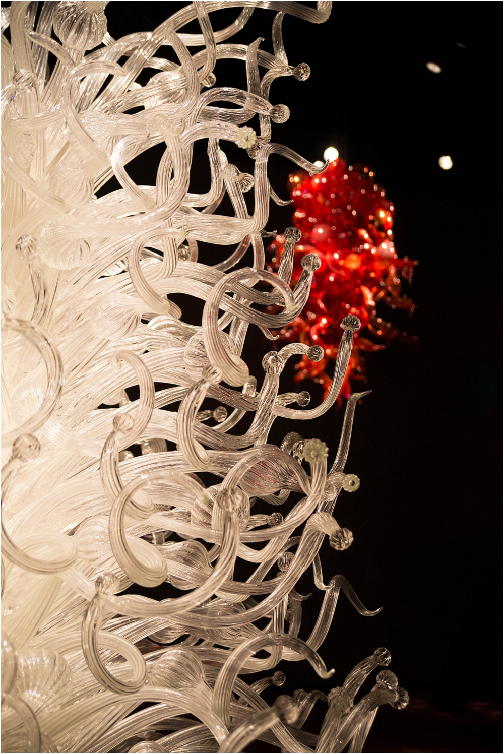 Chihuly Gardens and Glass Seattle-147_WEB.jpg