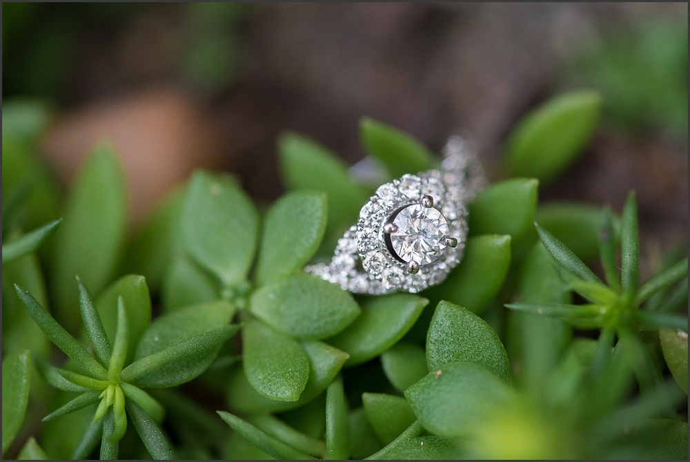 Norfolk Botanical Gardens Engagement Session-125_WEB.jpg