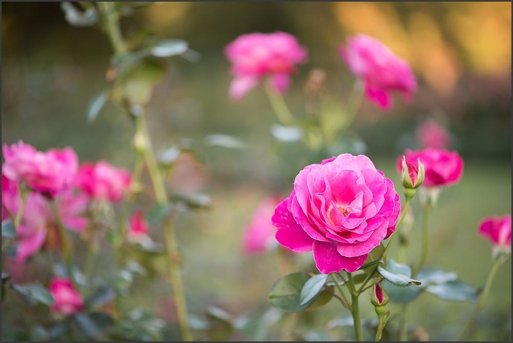 Norfolk Botanical Gardens Engagement Session-167_WEB.jpg
