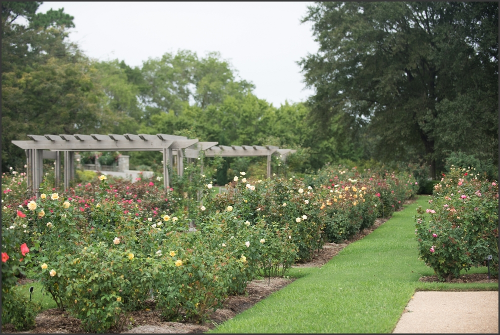 Norfolk Botanical Gardens Rose Garden-103_WEB.jpg