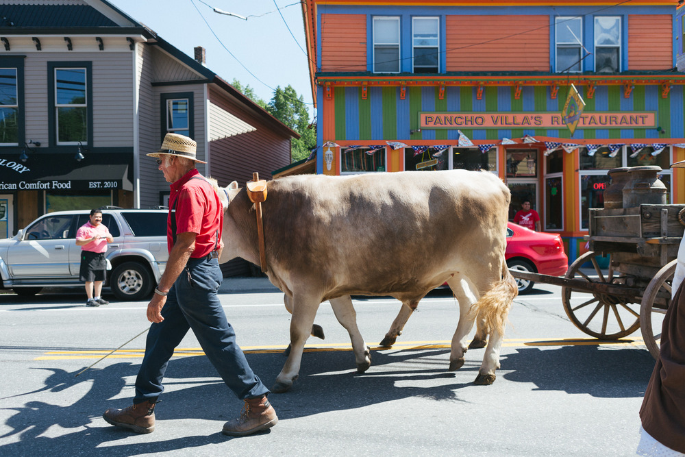 A farmer walks his Ox in the Tannersville Parade.jpg