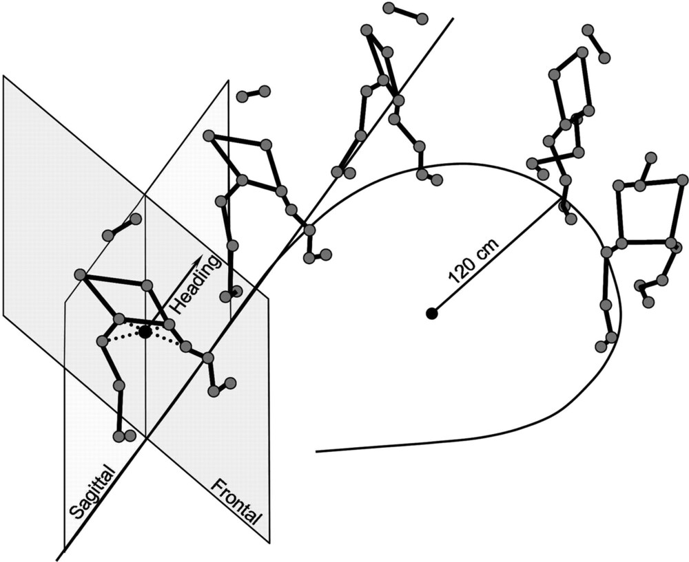 FIG. 1. Stick diagram shows typical body movements during curved walking. Point at the intersection of the dotted lines joining the hip and greater trochanter of left and right body sides in thefirst stickon theleftis thebody midpoint. Vector represented at the level of the body midpoint indicates the instantaneous heading. Sagittal plane: vertical plane passing through the heading vector; the plane follows the vector's orientation during walking. Frontal plane: vertical plane perpendicular to the sagittal plane.