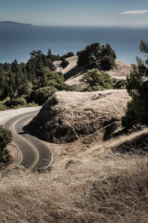 NorCal-MtTamalpaisHike-HillsRoadDeer1-lowres.jpg