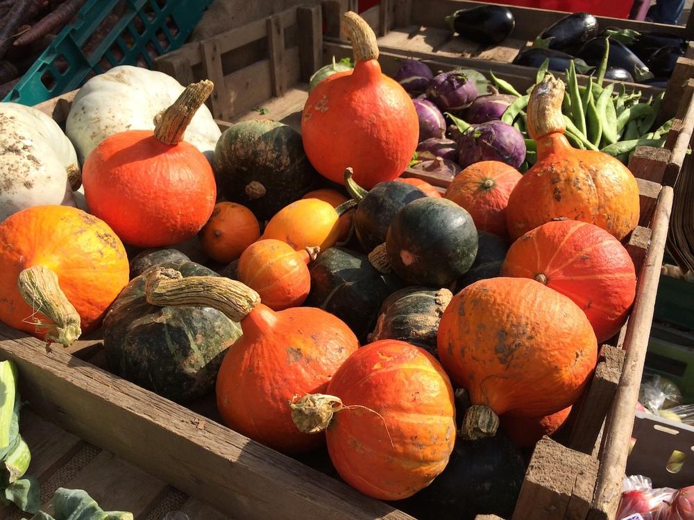 New pumpkins