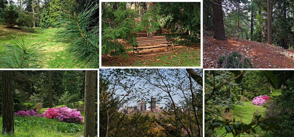 Pinetum area of Highland Park