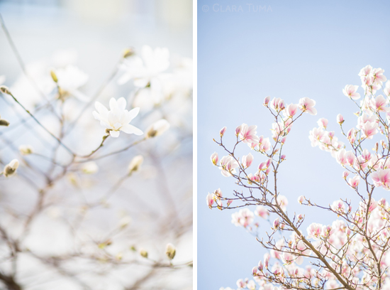 SpringBlooms_©ClaraTuma_01.jpg