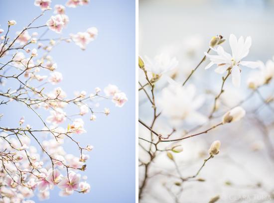 SpringBlooms_©ClaraTuma_03.jpg