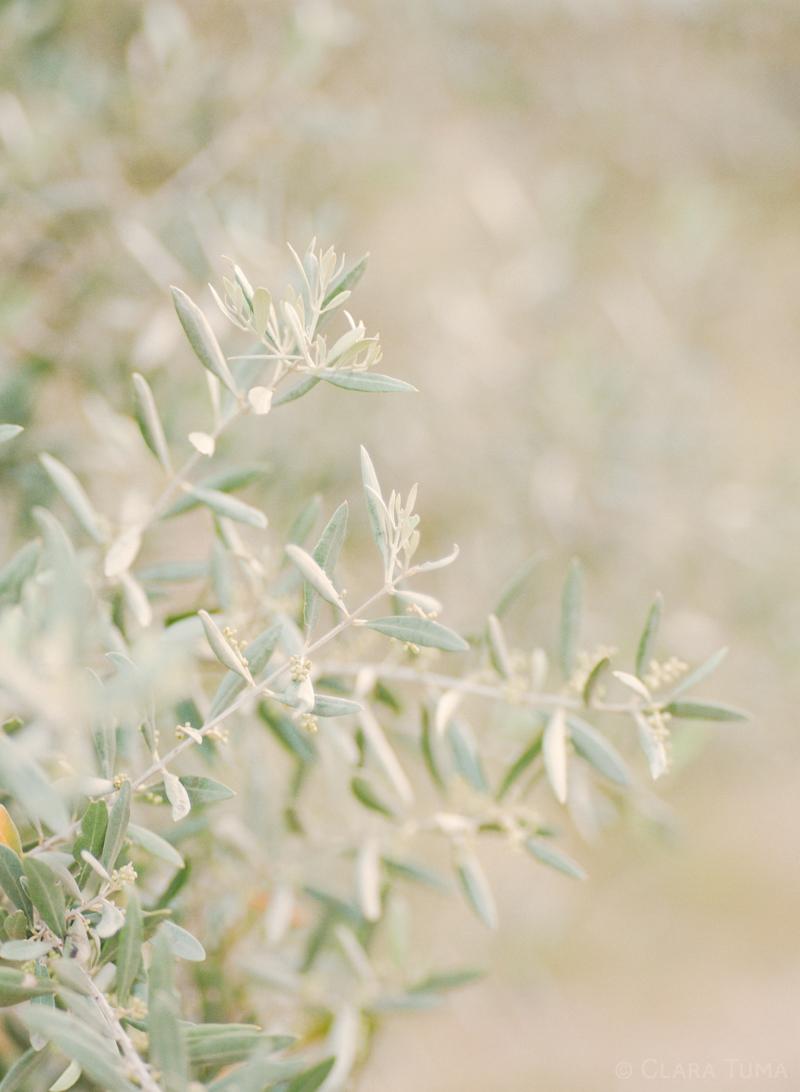 Provence-Grass_©Clara-Tuma_03.jpg