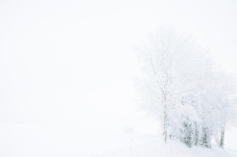 Winter_©ClaraTuma_01.jpg