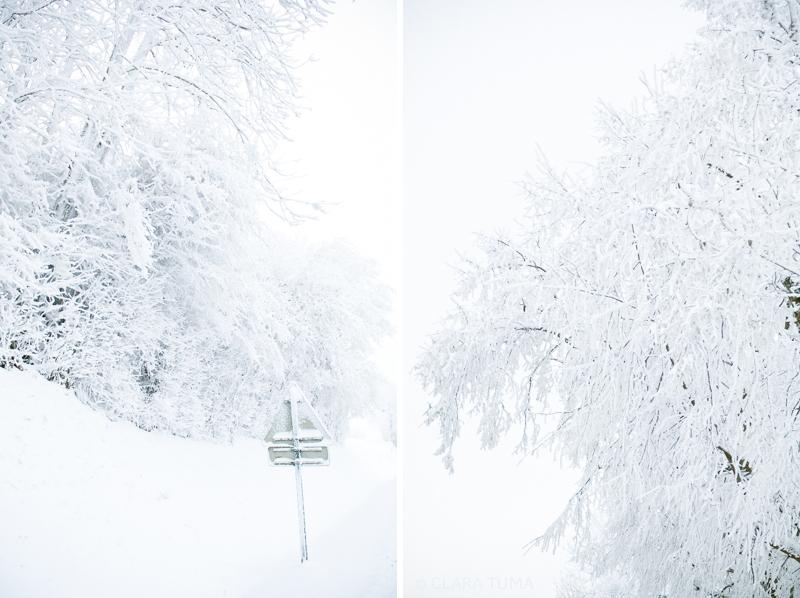 Winter_©ClaraTuma_02.jpg