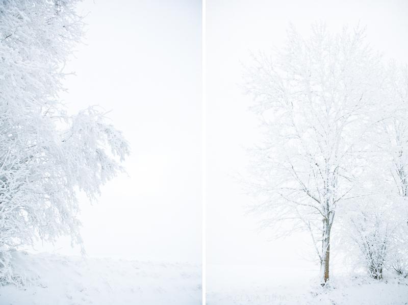 Winter_©ClaraTuma_03.jpg