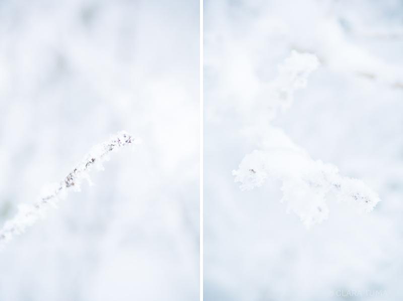 Winter_©ClaraTuma_05.jpg