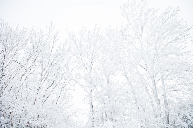 Winter_©ClaraTuma_06.jpg